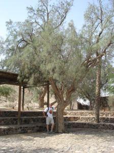 Tamarisk Tree in Beersheba 2